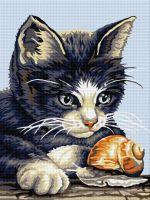 Pisicuță cu melc